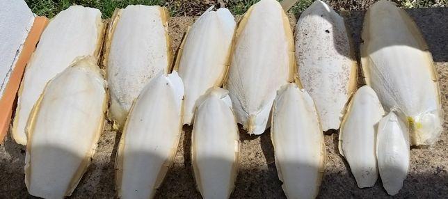 Osso Natural de Choco.
