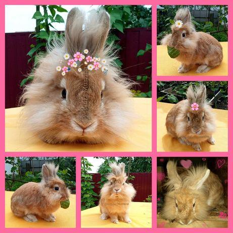 Обмін! Левоголовий кролик