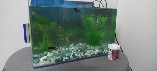 Vendo aquário com tudo!