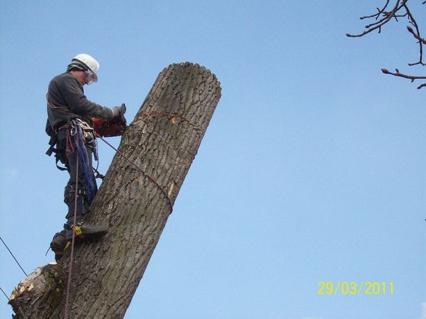 Wycinka drzew, usługi rębakiem, korekty drzew, zrębkowanie
