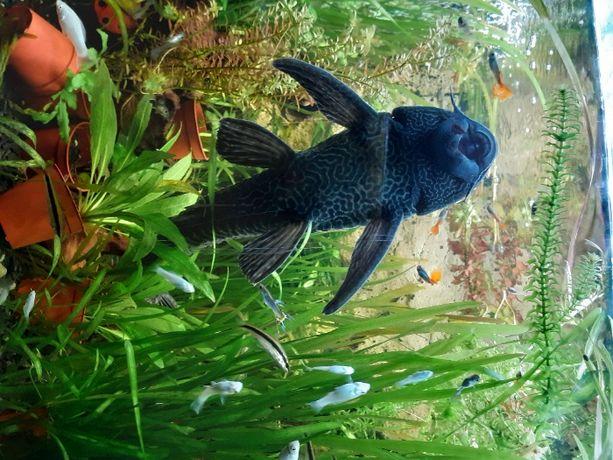 rybki akwariowe, rośliny akwariowe.