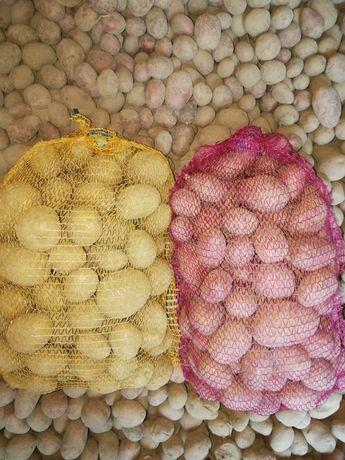 ziemniaki jadalne oraz sadzeniaki vineta belarosa