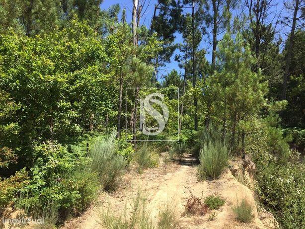 Terreno em Avelal com 3,9 ha em zona florestal