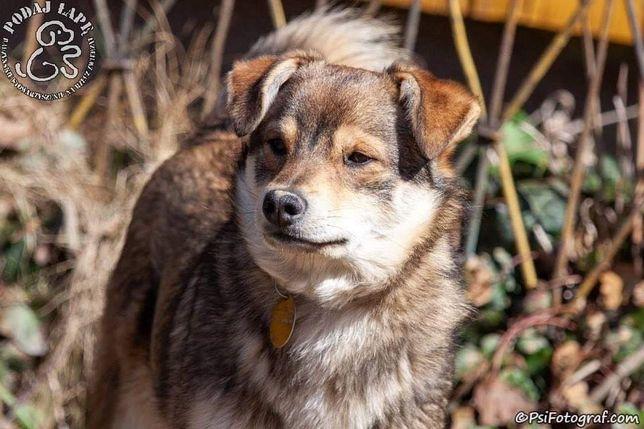 Piękna psina Dyzio do zaadoptowania