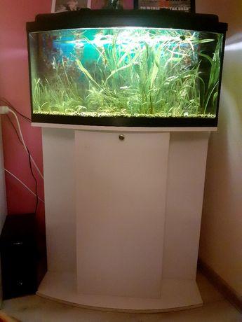 Akwarium 112l z rybkami
