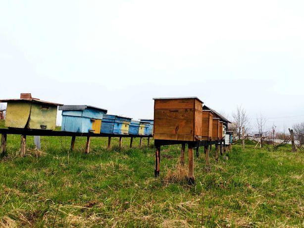 Бджоли 4 бджолопакети, пчелопакеты, матки Карпатка Доставка по Україні