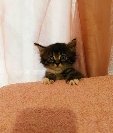 Котята, котики, кошенятка, кошка, кот, киця, кисюни