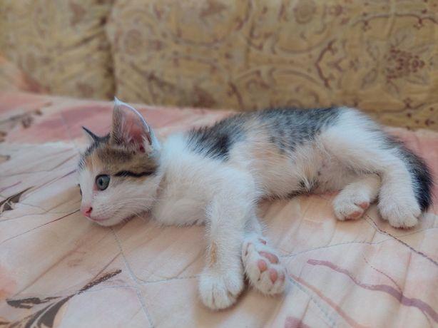 Котик шукає свій дім. 8 тижнів