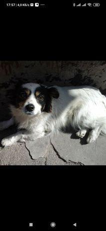 Пропала собака Бородинский