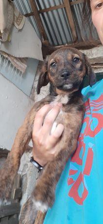 Cão bebé para adopção