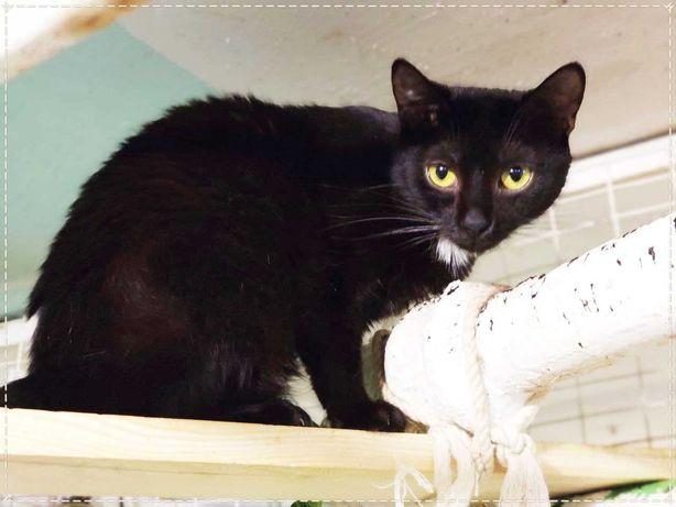 Самотня брюнетка Лучана | кішка, кошка, кошечка, котенок 1 рік