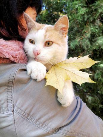 Кот в хорошие руки, Амур