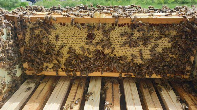 Sprzedam pszczoły rodziny , odkłady ,roje