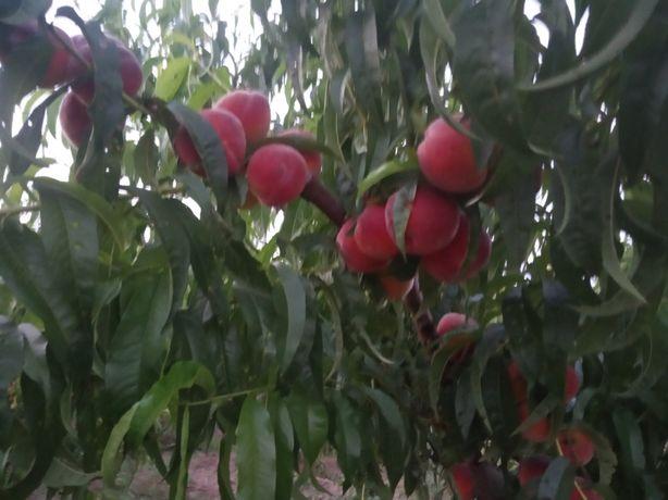 Продам персиковый сад