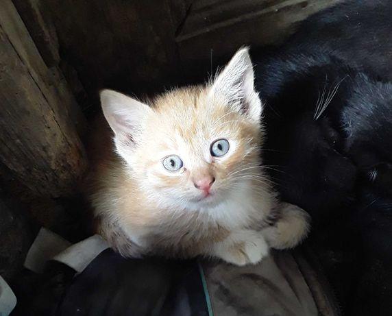 Отдам малышей котят