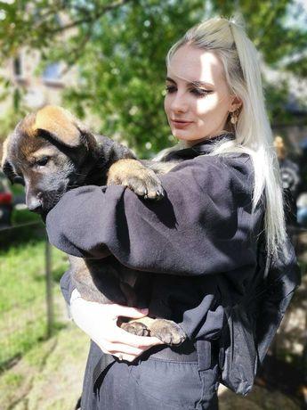 Petsitter/ Domowy Hotel dla Zwierzat/  Opieka nad psami i kotami