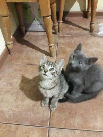 Кошенята в добрі руки