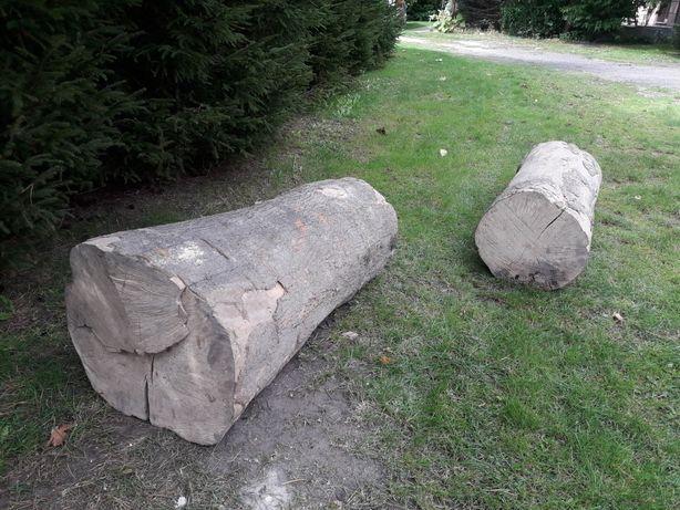 Jesion suchy 2 pniaki 125cm i 145 cm