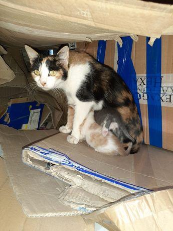 Котята ищут дом. З котёнка.