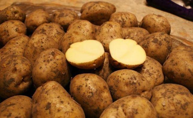 Картофель  крупный  2021
