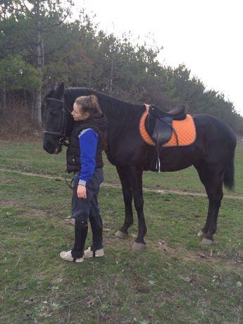 Продам лошадей, 2 мерена: гнидой и вороной, Украинская верховая