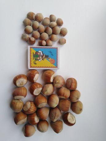 Продам саженцы фундука краснолиственного и боярышника Крупноплодного