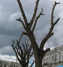 кронирование деревьев Омоложение деревьев спил деревьев