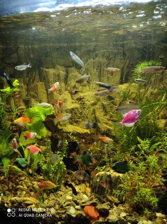 Akwarium profilowane