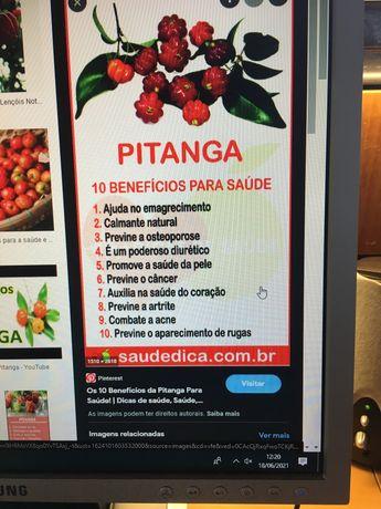Pitanga fruta Agri- doce, Vários  beneficios, antioxidante VC
