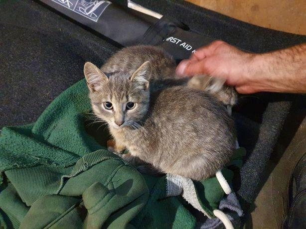 Спасите котиков, им негде жить