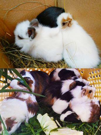 Плюшевые декоративные кролики мини пород гермевина, клетки, магазин