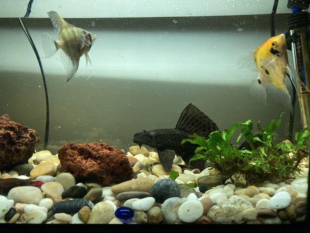 Aquario 50Lt completo + peixes e acessorios