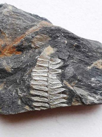 Caixa B com 100 fosseis e minerais portugueses - fossil