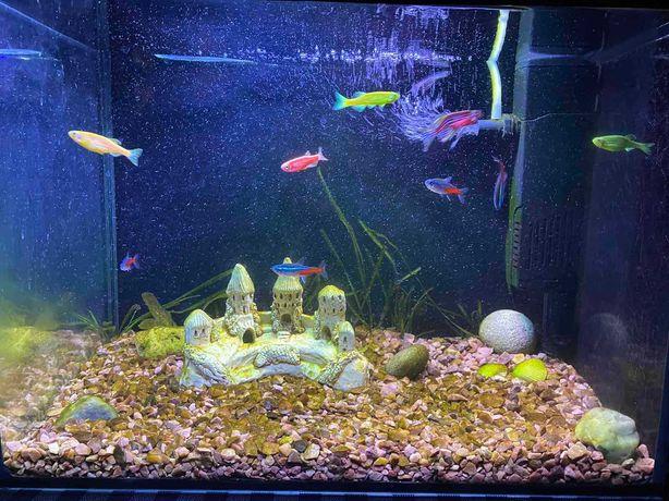Продам аквариум с декором и рыбками