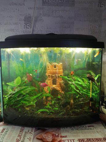 Полноценный действующий аквариум
