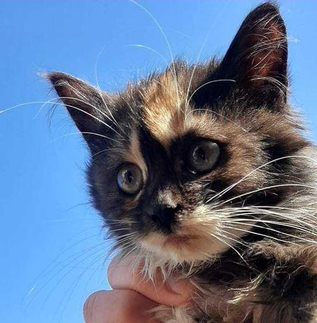 Віддам котиків в добрі руки.