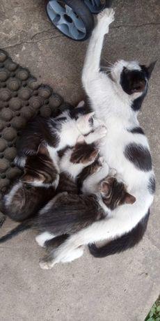 Pięć małych kotków