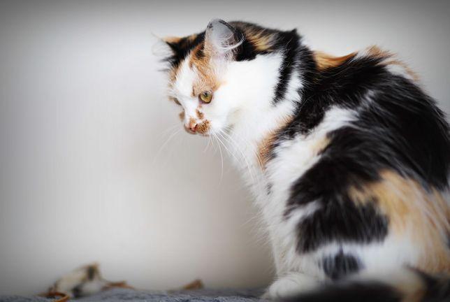 Miziak i Fruzia- dwupak poleca sie do adopcji