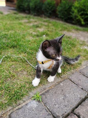 Kotek bez rodowodu