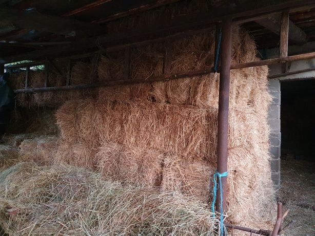 Fardos de palha para gado
