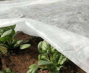Агроволокно белое от заморозков, отрез