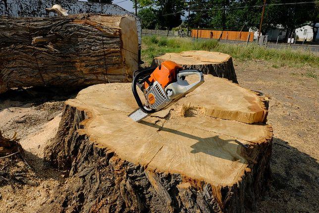Wycinka drzew - pielęgnacja drzew