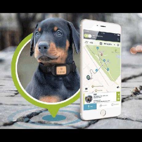 GPS para animais