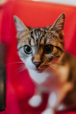котенок 1 год Маша. стерильна. Котики, котята, кошечка, котенок, к