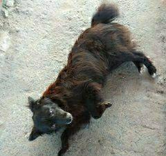 Пропала собака Сумы