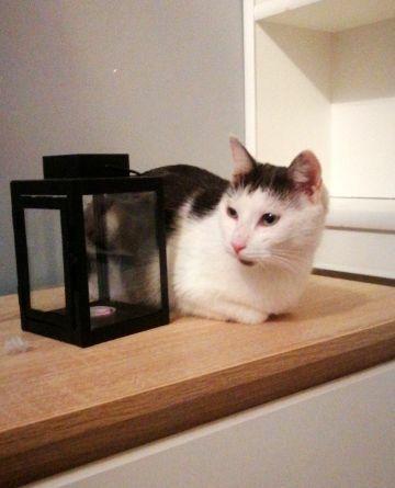 Esterka - koteczka milusia :)