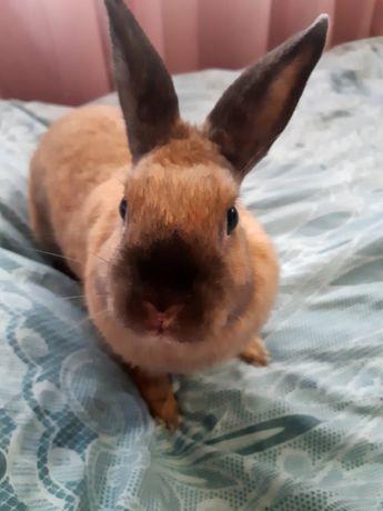 Кролик вместе с клеткой