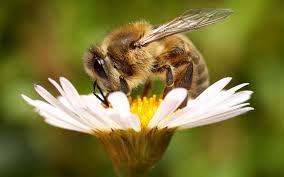 пчелосемьи, пакеты, матки