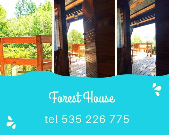 Forest House - Wix.com