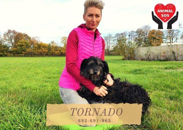 TORNADO - mały, czarny, kudłaty piesek szuka domu